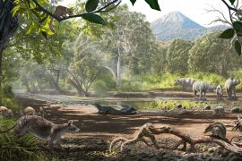 A study led by the University of Kansas is describing how a unique island ecosystem evolved 43 million years ago during the Eocene Epoch.