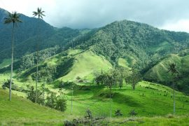 Tropical forests across the Andes Mountains are migrating to higher, cooler elevations in response to rising temperatures.