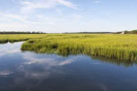 What is Salt Marsh?