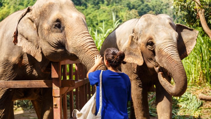 Travelers now want to visit wild animals in a more natural setting, but these attractions can be marked by the same inhumane conditions.