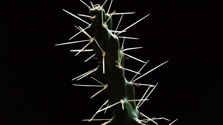 A recent study details the biomechanics of prickly, puncturing cactus plants and how their spine structure influences their effectiveness.