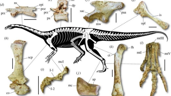 Macrocollum itaquii is the oldest long-necked sauropodomorph yet to be discovered.
