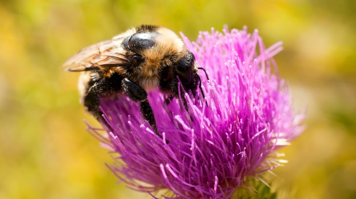 Exposure to pesticides is likely contributing to the declining population numbers among pollinator species worldwide.