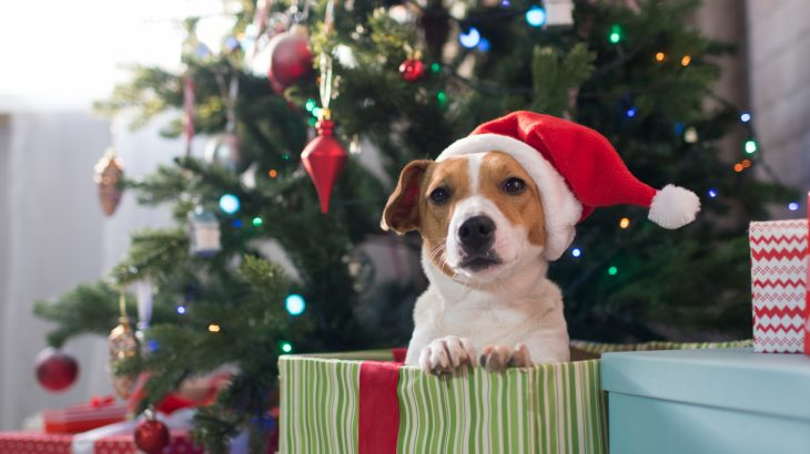 Giving a pet as a gift is a controversial notion with some in the animal welfare field urging people to forgo the furry presents altogether.