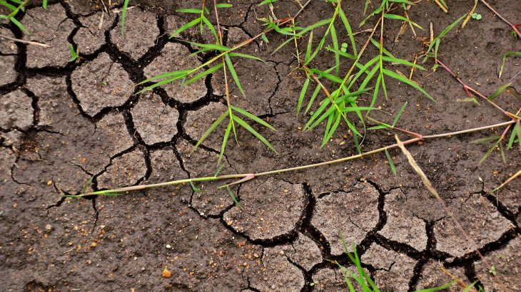 The 4 per 1000 Initiative argues that the answer to mitigating climate change and increasing carbon storage lies in the soil.