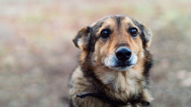 A new report by the National Sheriffs' Association warns about the severity of animal cruelty and its link to other violent crimes.