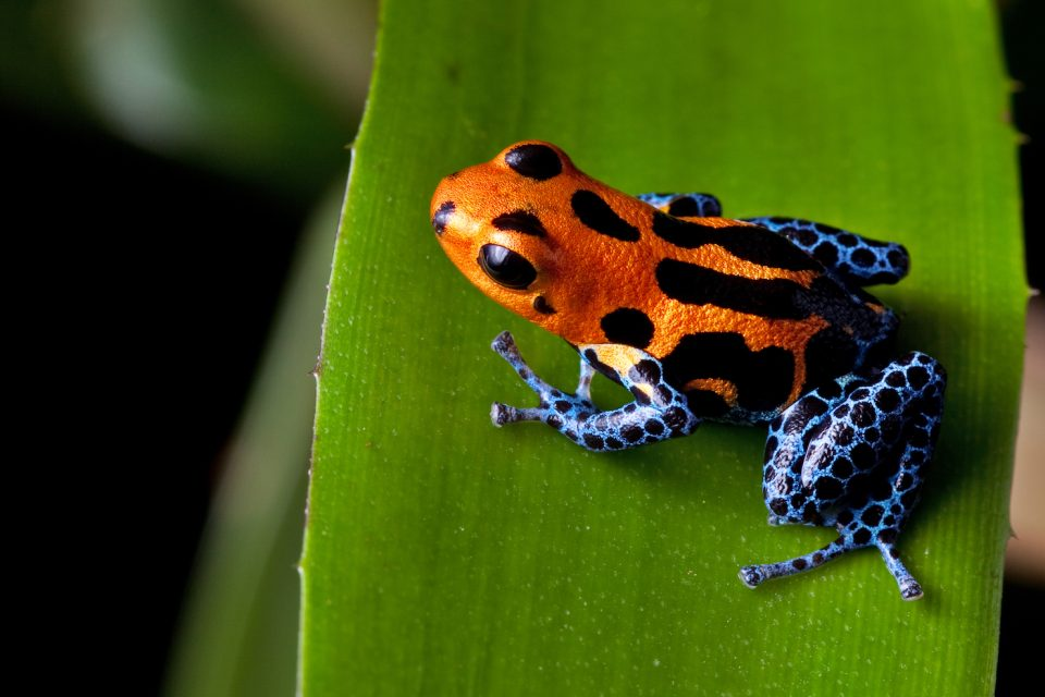 A newly developed method using machine learning will make it much easier to predict species that could be eligible for the IUCN list.