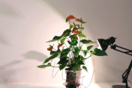 Experts at MIT have unveiled a houseplant that can actually guide itself to receive sunlight whenever necessary.