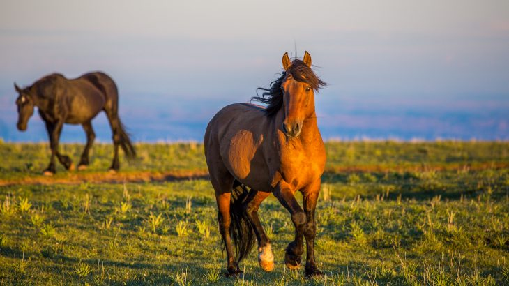 A U.S. District Court judge issued a preliminary injunction blocking the government from experimenting with sterilization of wild horses
