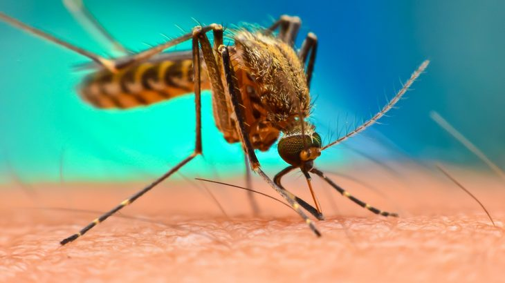 A team of researchers from UC San Diego have taken a different approach to treating and preventing the parasitic disease malaria.