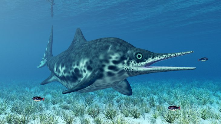 Researchers analyzed the remains of an ichthyosaur and found evidence that the extinct marine reptiles were likely warm-blooded.