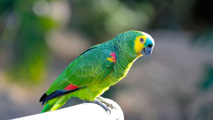 The genome analysis of a blue-fronted Amazon parrot is offering new insights into the longevity and cognitive abilities of these birds.