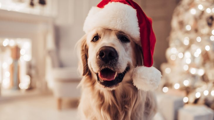 While the holidays are a time of warmth and celebration, they also pose some of the biggest risks for your four-legged friends.
