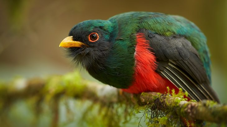 Birds first evolved iridescent feathers around 150 million years ago after they began using trees as a way to keep safe from predators.