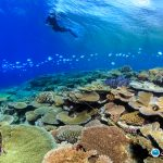 Researchers have found that corals along the Great Barrier Reef that survived 2016's bleaching event were more resilient in 2017.