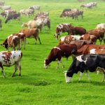 Experts are reporting that the inefficient use of land for agriculture is a major contributor to harmful greenhouse gas emissions.