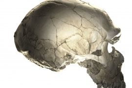 A new study has found that some individuals with specific Neanderthal DNA fragments have heads that are slightly less rounded.