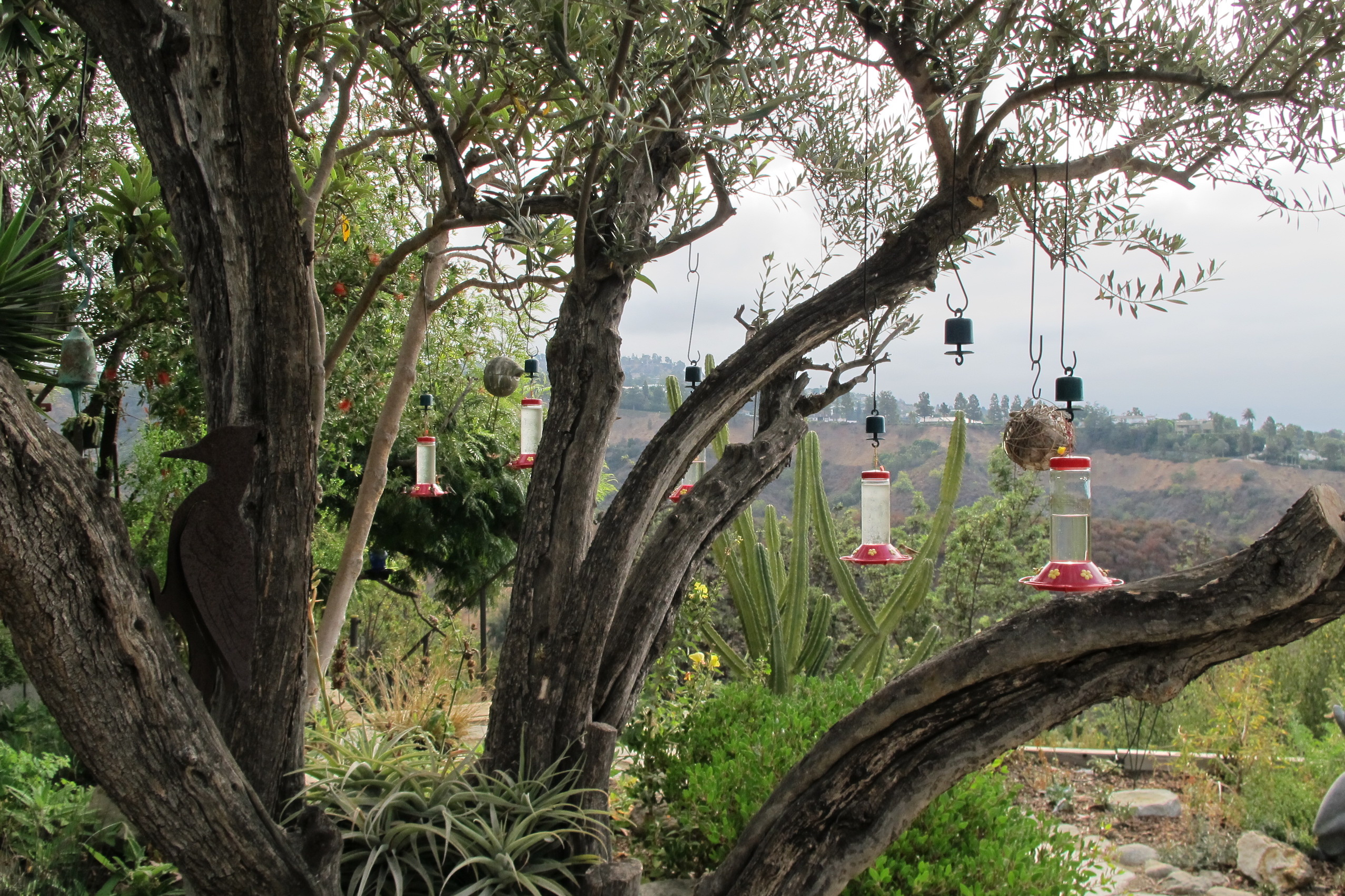 How Bird Feeders Are Changing Hummingbird Interactions Earth Com