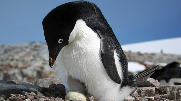A new investigation into a penguin supercolony has revealed that the penguins have lived in this region undetected for 2,800 years.