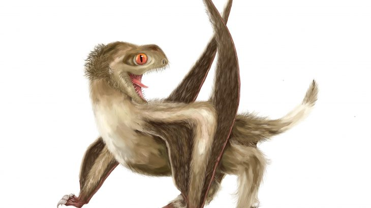 Palaeontologists from the University of Bristol discovered that flying reptiles known as pterosaurs had four different kinds of feathers.