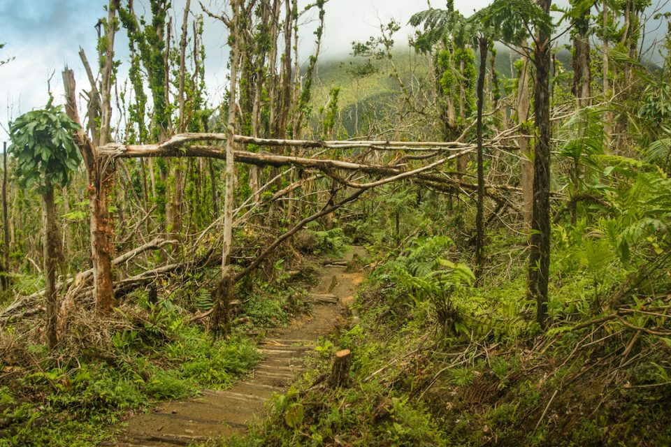 A new study following the aftermath of Hurricane Maria reveals how forests adjust to recover from such powerful storms.