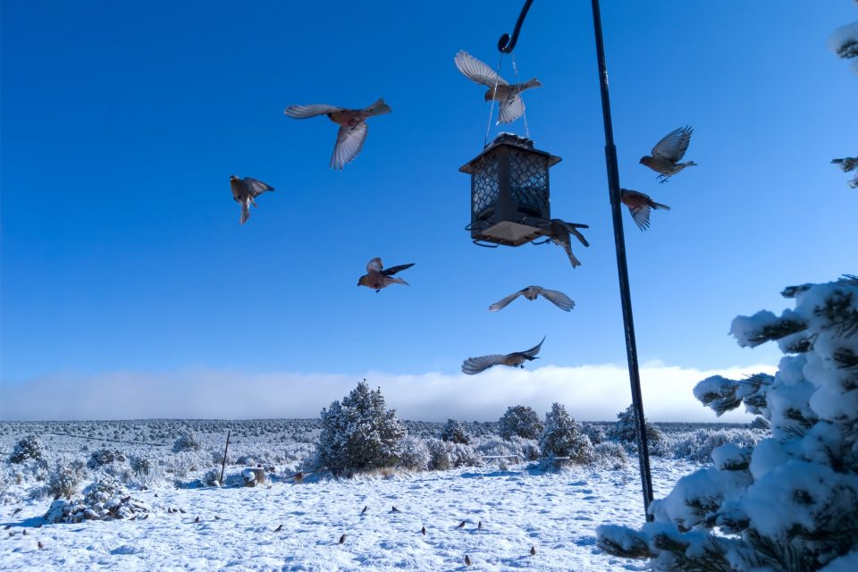 Are we helping birds by feeding them through the winter months? Or are we creating a dependency with unforeseen negative effects?