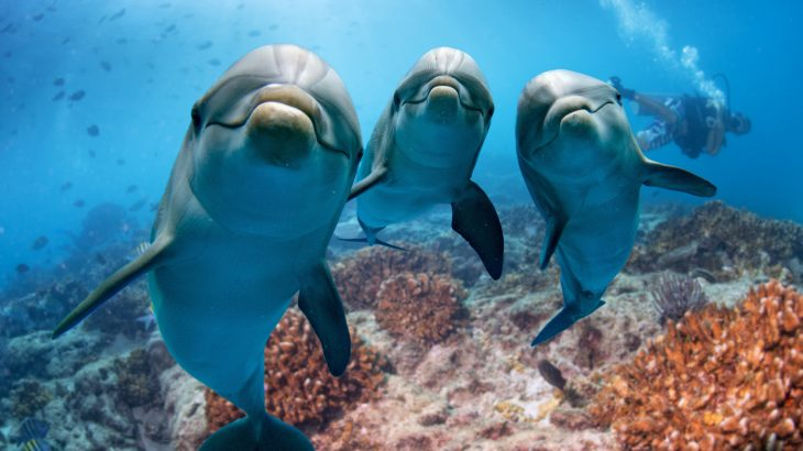 Researchers have discovered that some dolphins enjoy watching television, and they are not picky about what is on.