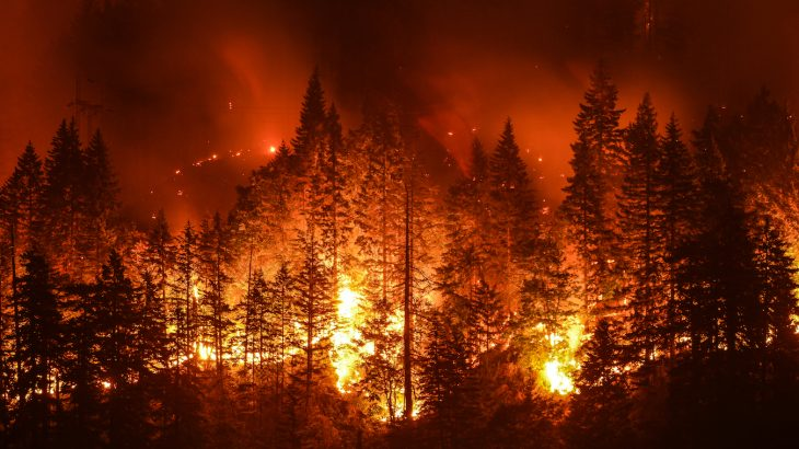 A new study has found that fires have an impact on the photosynthesis of unburned forests, altering the land carbon budget.