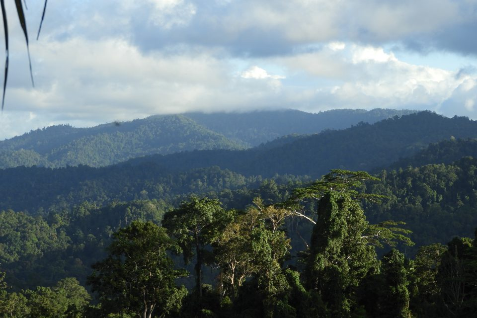 Experts at Oregon State University have identified a remarkable way that tropical forests manage to maintain their biodiversity.