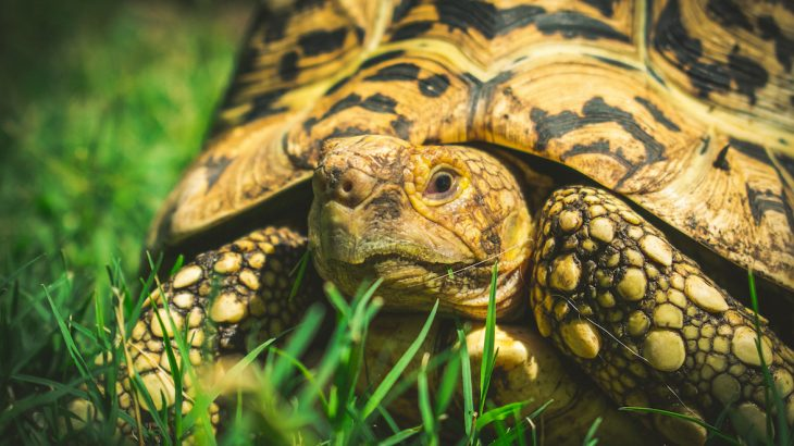 A new Wildlife Justice Commission report outlines the little known world of illegal turtle and tortoise trading for the live pet trade.