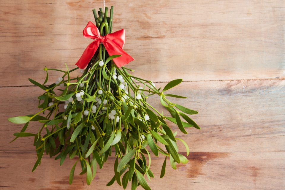 The Christmas tradition of kissing under the mistletoe comes from ancient Greece where mistletoe was associated with fertility.
