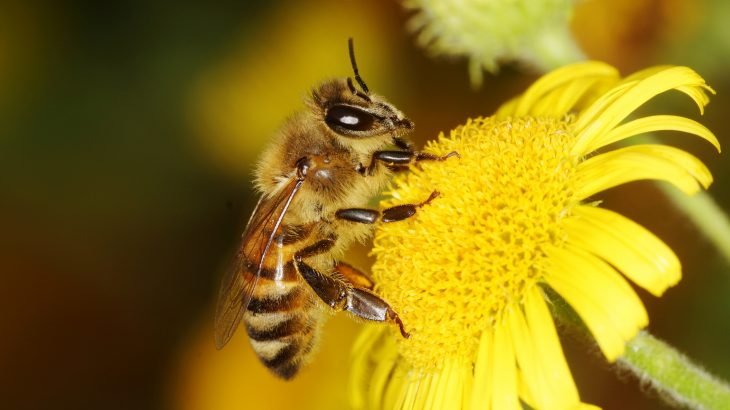 A new study from Queen Mary University of London has revealed that bees require very few brain cells to count objects.
