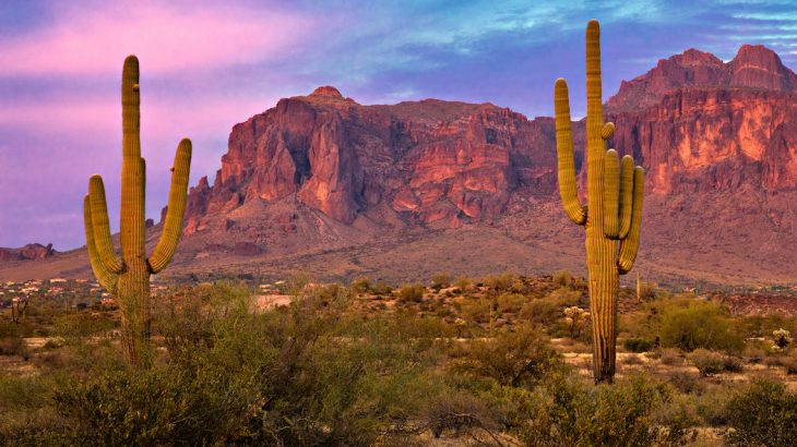 The main cause of death for the saguaro in their upland habitat in Arizona where they're most plentiful is freezing.