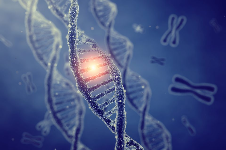 DNA replication was first described in the late 1950s, and scientists have been working ever since to explain how this process is regulated.