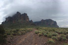 Desert grasses, cacti and desert beetles all pull condensed water from fog which settles over the desert at night.