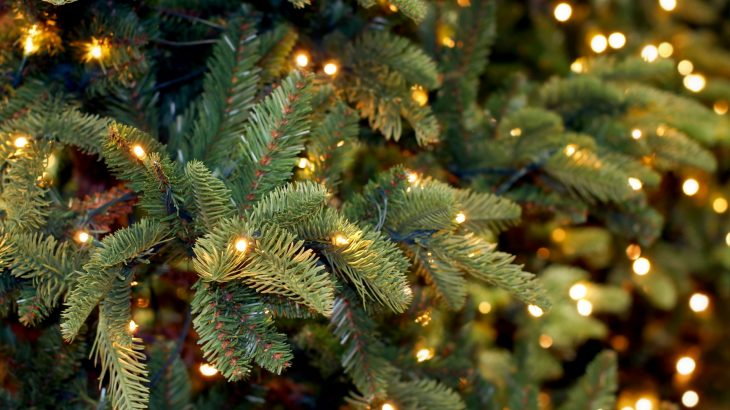 Christmas tree pine needles could soon be used in a wide array of products including paint and food sweeteners.