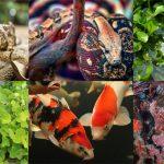 Invasive Species (Plants & Animals)