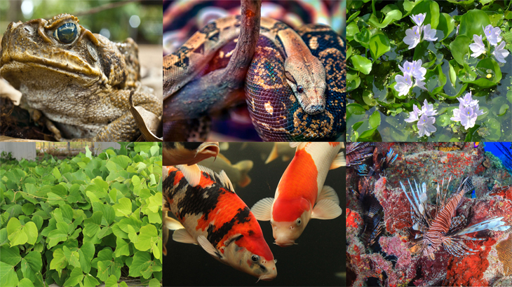 Invasive Species (Plants & Animals)