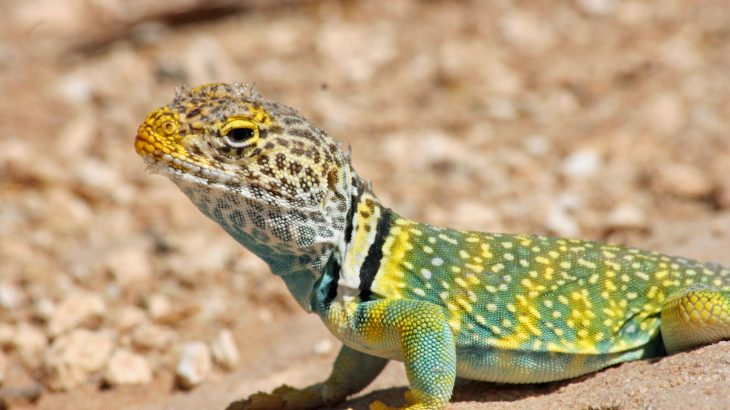 A broad range of animals have varying types of color-changing abilities, from cuttlefish and chameleons to snowshoe hare and rock ptarmigan.