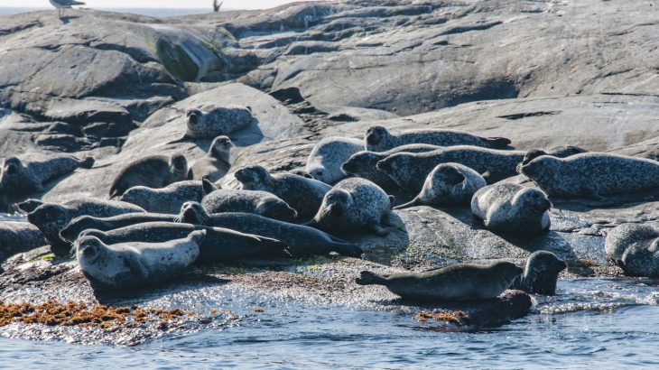Climate change, nutrient levels in the ocean, and fisheries have a far greater impact on Baltic Sea fish stocks than seals do.
