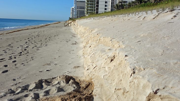The experts report that seagrass beds can reduce the need for the expensive beach nourishments that are currently used.