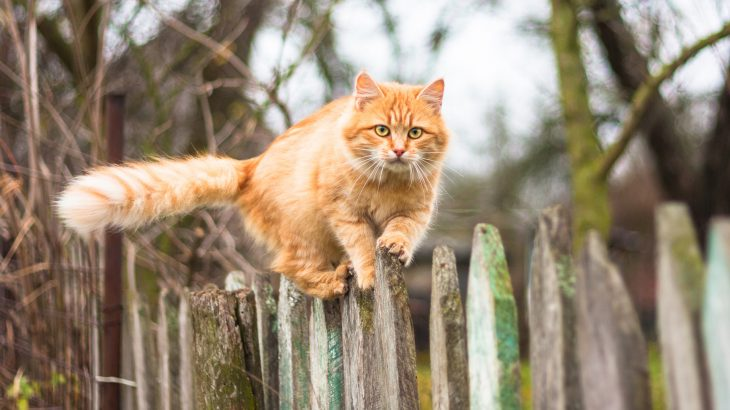 Most cat owners think that their pets will instinctively hunt birds and mice whether they discourage the behavior or not.