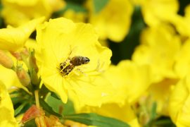 A team of biologists at Tel Aviv University has discovered that some plants can hear bees and other pollinators approaching.