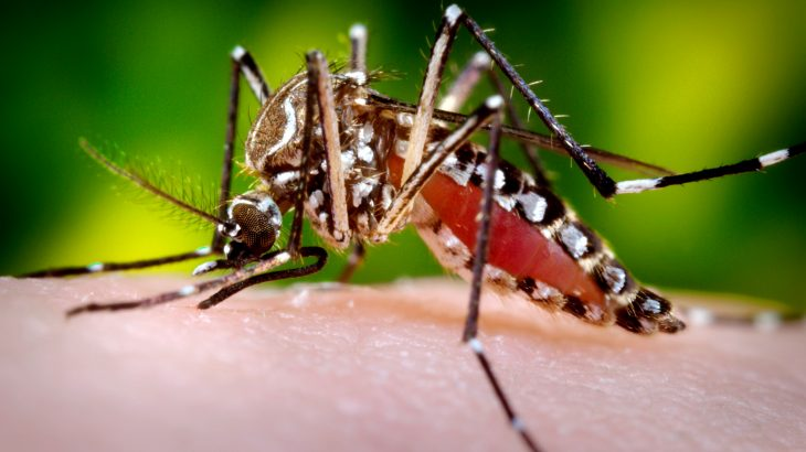 A new study could pave the way for a type of mosquito birth control to reduce mortality rates and prevent diseases from spreading.