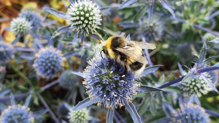 Community and residential gardens could offer a lifeline to pollinators and could help efforts to conserve and protect pollinating insects.