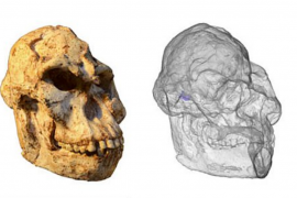 New research from the University of Witwatersrand has found that 'Little Foot' walked more like a chimp than a human.