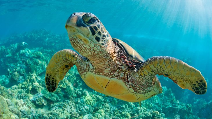 Over 75 percent of marine mammal and sea turtle populations have showed significant signs of recovery due to the Endangered Species Act..