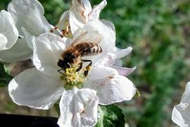 Declining bee populations may not be the only reason plant pollination has been suffering in some regions.