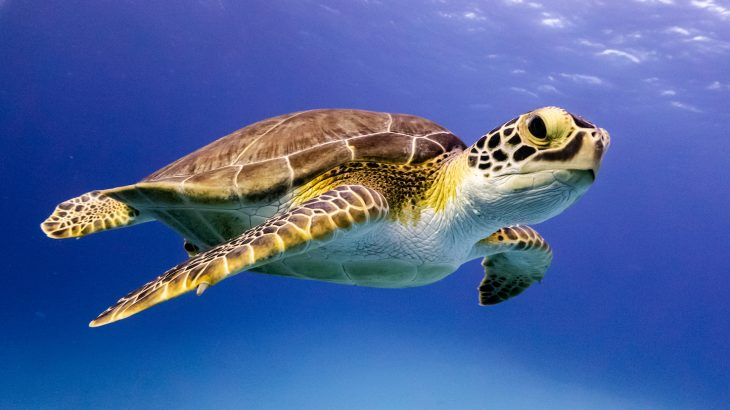 In an effort to protect sea turtles, fake GPS eggs are now being used to track the location and movement of poachers.