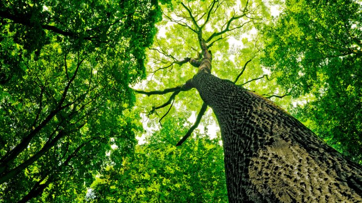 The environmental stress of climate change is actually causing plants and soil to absorb less CO2 than normal.